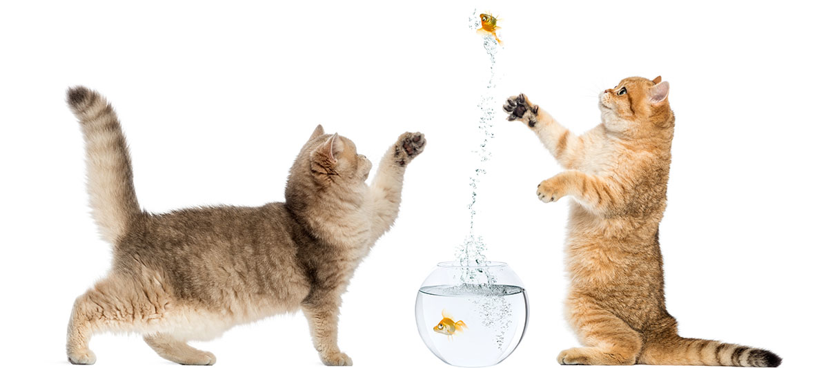cat catching fish
