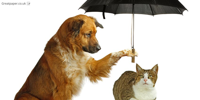 Umbrella, Cat and Dog